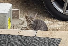 Discovery alert Cat Unknown , Between 1 and 3 months Montélier France