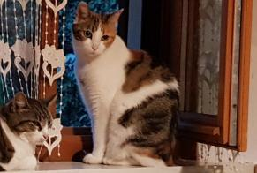 Disappearance alert Cat Female , 8 years Eybens France