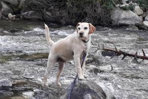 Disappearance alert Dog miscegenation Male , 6 years Cauterets France