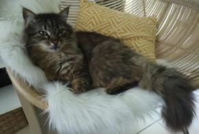 Disappearance alert Cat miscegenation Male , 10 years Quimper France