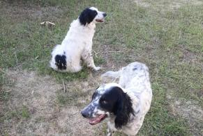 Discovery alert Dog Male , 5 years Neuvicq-le-Château France
