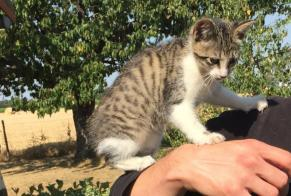 Discovery alert Cat Female , Between 1 and 3 months Les Cerqueux France