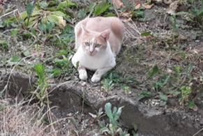 Discovery alert Cat  Unknown , 5 years Saint-Quentin France