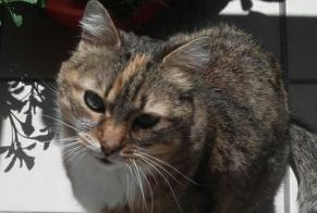 Disappearance alert Cat Female , 13 years Lyon 4e Arrondissement France