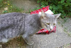 Discovery alert Cat Male , 1 year Versailles France