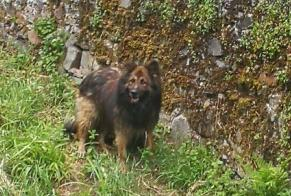 Discovery alert Dog miscegenation Male , 4 years Malemort France