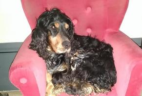 Disappearance alert Dog  Male , 8 years Chasselay France
