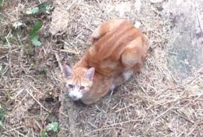 Discovery alert Cat miscegenation Male , Between 9 and 12 months Menars France