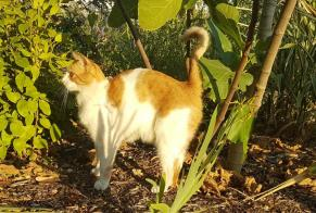 Discovery alert Cat Male , 7 years Nantes France