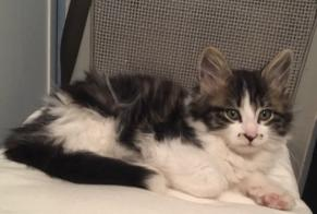 Disappearance alert Cat miscegenation Male , 1 years Bricqueville-la-Blouette France