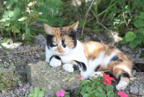 Disappearance alert Cat miscegenation Female , 9 years Sainte-Marie France
