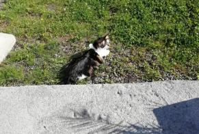 Disappearance alert Cat Female , 1 years Brissy-Hamégicourt France