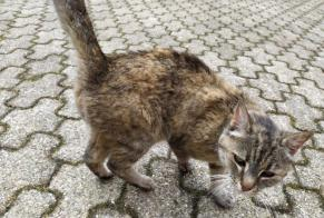 Discovery alert Cat Female , 2 years Saint-Pierre France