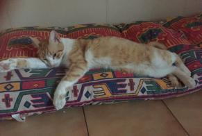 Disappearance alert Cat Male , 4 years Martigues France