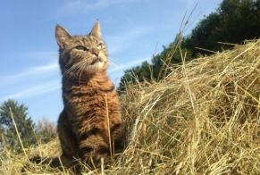 Disappearance alert Cat  Male , 7 years Nogent-l'Artaud France