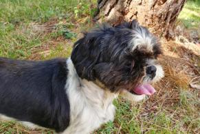 Discovery alert Dog Male , 5 years Cherveux France