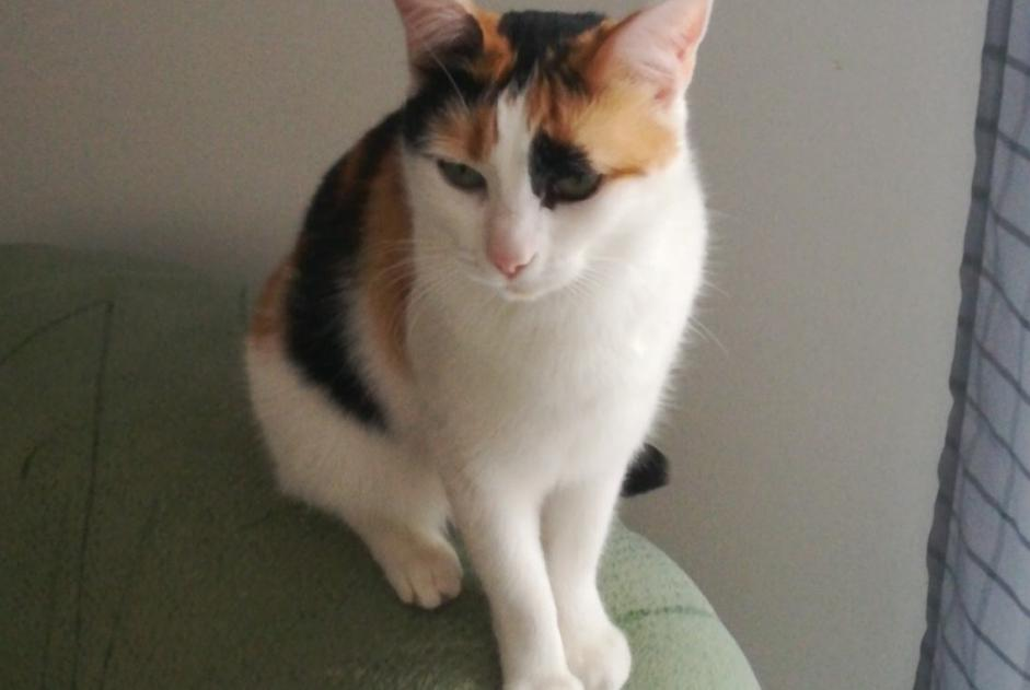 Disappearance alert Cat Female , 3 years Châteauneuf-sur-Charente France