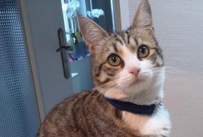 Disappearance alert Cat  Female , 1 years Saint-Quentin France