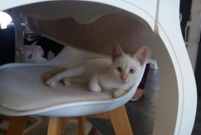 Discovery alert Cat Male , Between 4 and 6 months Niort France