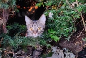 Discovery alert Cat Unknown , 4 years Sceaux France