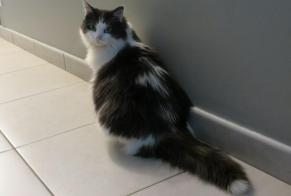 Disappearance alert Cat Female , 8 years Brenoux France