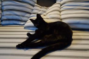 Discovery alert Cat Female , Between 4 and 6 months Besançon France