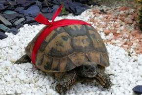 Disappearance alert Tortoise Female Verdilly France