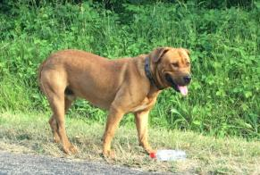 Discovery alert Dog miscegenation Male , 6 years Cruzy-le-Châtel France
