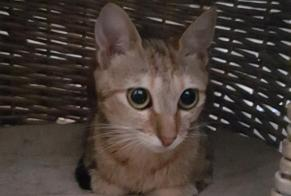Discovery alert Cat Female , Between 4 and 6 months Roanne France