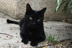Disappearance alert Cat Male , 5 years Claira France