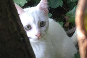 Discovery alert Cat Female , Between 1 and 3 months Germond-Rouvre France