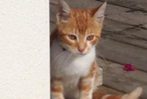 Discovery alert Cat Male , Between 4 and 6 months Soustons France