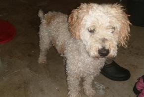 Discovery alert Dog  Male , 1 year Saint-Laurent France