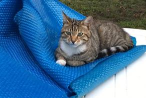 Disappearance alert Cat Male , 1 years Perpignan France