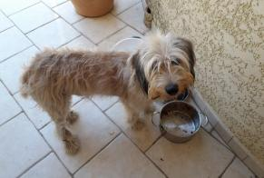Discovery alert Dog  Male , 3 years Bompas France