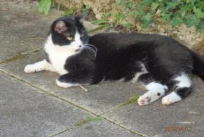 Disappearance alert Cat Male , 3 years Besançon France