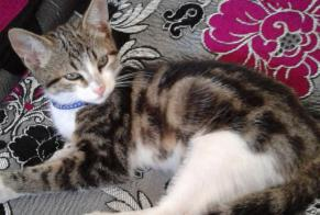Discovery alert Cat Male , Between 1 and 3 months Saint-Genest-Lerpt France