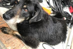 Discovery alert Dog Male , 10 years La Gacilly France