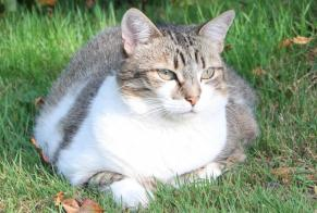 Disappearance alert Cat  Female , 10 years Languidic France