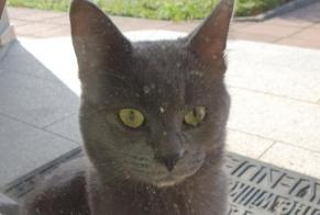 Discovery alert Cat Male , 4 years Alteckendorf France