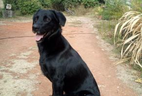 Discovery alert Dog  Male , 1 year Vallières-les-Grandes France