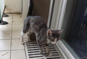 Discovery alert Cat Unknown , Between 4 and 6 months Besançon France