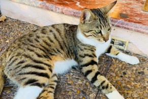 Discovery alert Cat Male , Between 7 and 9 months Marseille France