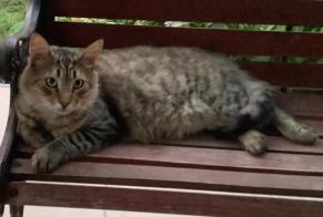 Discovery alert Cat  Unknown , 4 years Prunelli-di-Fiumorbo France