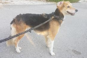 Discovery alert Dog miscegenation Female , 4 years Cessey France