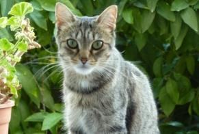 Disappearance alert Cat  Female , 12 years Marseille 5e Arrondissement France