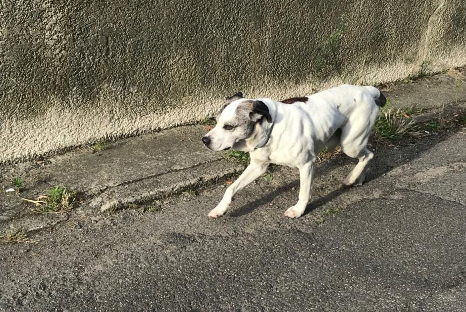 Discovery alert Dog Unknown , 5 years Mont-de-Marsan France