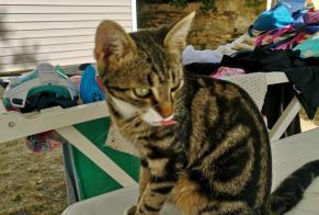 Discovery alert Cat Male , Between 7 and 9 months La Ciotat France