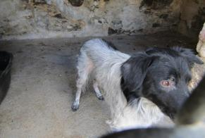 Discovery alert Dog  Male , 5 years Secondigny France