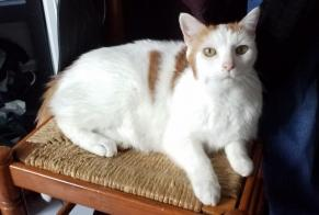 Disappearance alert Cat miscegenation Male , 16 years Marseille 8e Arrondissement France